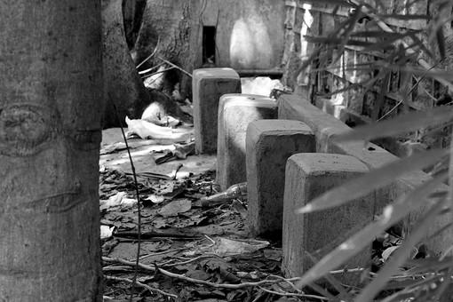白黒 モノクロ 建物 廃墟 古い 古びた 無人 壊れた 壁 コンクリート 景色 風景 町並み 荒れ地 ブロック 植物 樹木 落ち葉 枯れ葉 ごみ ゴミ 幹 葉 葉っぱ 自然