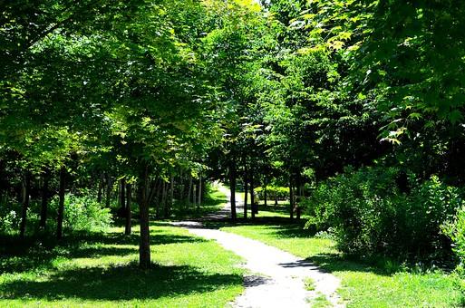 自然 景色 風景 山 田舎 植物 樹木 森 森林 林 木 樹 空 新緑 葉 葉っぱ 幹  背景  リフレッシュ 癒し 緑 道 道路 小道 雑草 草むら