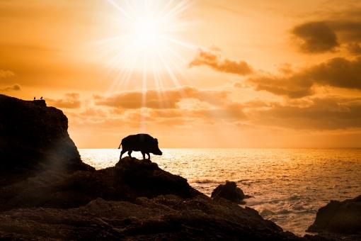 海辺の猪の写真