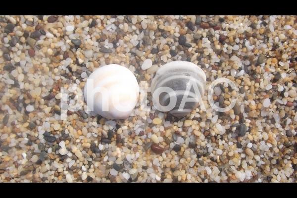貝のカップルの写真