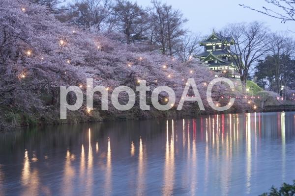 高田公園 桜の写真