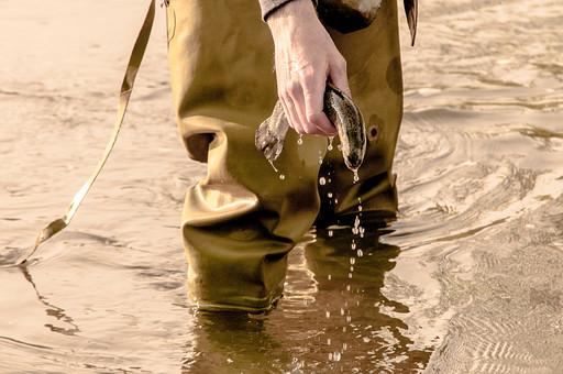 川釣り 川 河 ハット 帽子 立つ 水面 釣り フィッシング フライフィッシング アウトドア 魚 釣り人 フィッシャーマン 人物 男性 外国人 白人 髭 ひげ 景色 風景 自然 趣味 ホビー 横向き 釣り竿 ロッド リール つかむ 持つ 投げ釣り キャスティング 歩く 探す 見る 釣った魚 釣果 獲物 キャッチ リリース 川の中 河の中 手元 ニジマス