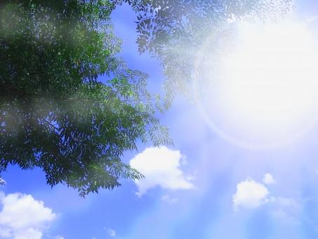 日差し 空 青空 大空 スカイ wood 風景 景色 反射 バック 放射 緑 グリーン 黄緑 新緑 明るい 林 山毛欅 ブナ林 山毛欅林 ぶなの木 樹木 自然 春 初夏 里山 癒し リラクゼーション 木 木の葉 木漏れ日 輝 フラッシュ お日様 日光浴 web素材 web背景 葉 日本 植物 屋外 壁紙 背景 背景素材 バックグラウンド 光 環境 エコ さわやか 爽やか 森 森林 木々 葉っぱ 枝 眩しい まぶしい こもれび チラシ背景 自然背景 大自然背景 夏 成長 日光 太陽 緑の背景 大自然 テクスチャ
