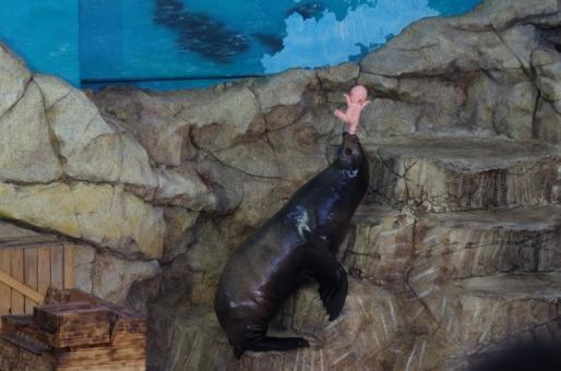 アシカ アシカショー 鳥羽水族館 三重 旅行 観光