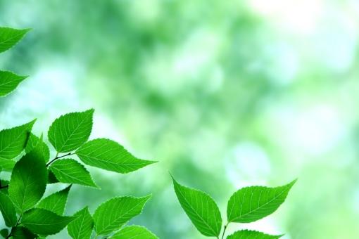 自然 植物 樹木 森 木々 葉っぱ 木の葉 新緑 初夏 五月 グリーン 黄緑 緑 爽やか 光透過光 木漏れ日 葉脈 待ち受け画面 ポストカード クリーンなイメージ コピースペース 野外アウトドア 若葉 綺麗な空気 マイナスイオン はつらつ 若い 背景 眩しい バックグランド