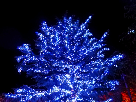 イルミネーション イルミネーション 明かり あかり 灯り 光 光る 照明 ライト ライトアップ ライト ライトアップ 冬 青 電飾 飾り クリスマス クリスマス 木 木々 植物 輝く 煌く 綺麗 美しい 輝き 煌き 夜