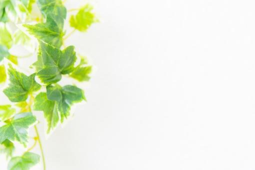 自然 植物 樹木 葉っぱ 木の葉 新緑 緑 グリーン 初夏 夏 爽やか 木漏れ日 光 透過光 マイナスイオン 清潔感 澄んだ空気 若葉 眩しい テクスチャー 5月 壁 壁紙 カフェ テクスチャ ナチュラル アンティーク 板 おしゃれ 雑貨 ベージュ ウォール リメイク リノベーション 温もり 白壁 白 コピースペース イメージ クリーン 家 ホーム ハウス
