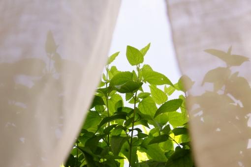 日陰 緑 緑化運動 シャドウ 熱中たいさく 散歩 ハンカチ ジュース 飲み物 アイスクリーム ベンチ 夕涼み 木立 カフェ すだれ 陽射し 熱中症 さわやか ガラス越し 植物 観葉植物 リビング 玄関 インテリア 酷暑対策 おしゃれな小物 家庭園芸