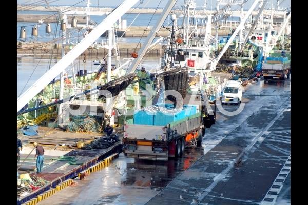 八戸港 鯖の水揚げの写真