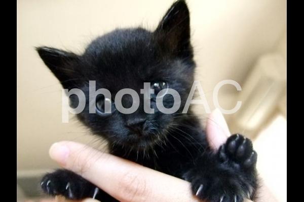 黒猫の子猫の写真