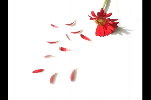 花占いの写真