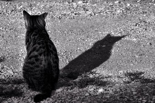 猫 ネコ 影 シャドー モノクロ 動物 背景