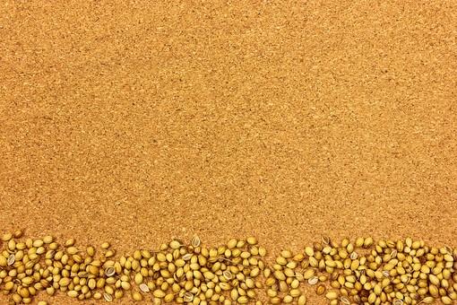 スパイス ハーブ コリアンダー キッチンハーブ 種 調味料 香辛料 香料 食べ物 食材 乾燥 フレーム 余白 コピースペース テキストスペース 背景 背景素材 バックグラウンド コルク コルクボード 上余白 並べる 複数 茶 植物 シンプル