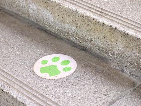 和歌山 和歌山県 和歌山電鐵 JR和歌山駅 貴志川線 駅長たま ホーム 階段 足跡 あしおと 足あと 肉球 にくきゅう たま たま電車 かわいい 足下 足元 足許 足もと コンクリート
