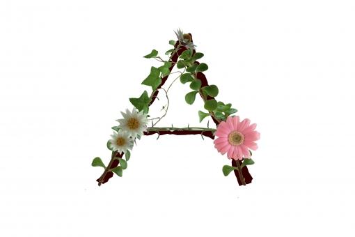 アルファベット ローマ字 英文字 植物 花 ガーベラ 文字 テクスチャ 素材 アイビー 白い花