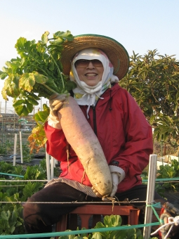 大豊作 大根 お姉さん サングラス おばあ様 晴天 農業 笑顔 自然 緑 百姓 豊作 収穫 畑 野菜畑 女性 おばぁちゃん おばあちゃん ばぁちゃん ばあちゃん 農作業 野菜 大根の葉 新鮮 フレッシュ 生産地 採れたて 家庭菜園 菜園
