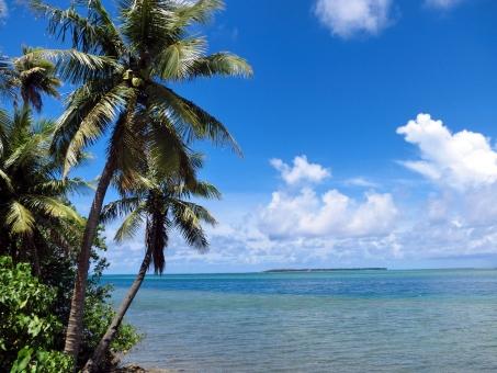 海 青空 白い雲 ヤシの木 椰子の木 植物 エメラルドグリーン きれいな海 透き通る水 水平線 南国 南の国 南の島 リゾート バカンス 開放感 夏 旅行 リフレッシュ 青 自然 風景 景色 グアム guam 無人 sea 晴れ 澄んだ空 日差し