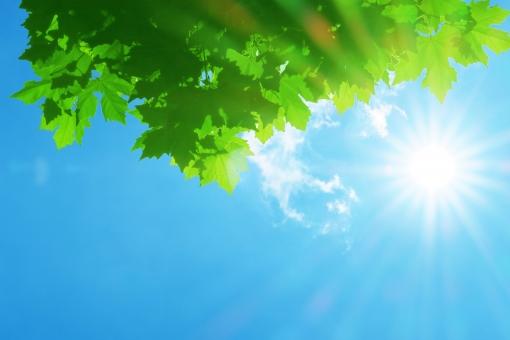 青空 空 青 太陽 日 太陽光 夏 葉 植物 木漏れ日 uv 白 スキンケア 真夏 酷暑 猛暑 暑い 暑中見舞い 暑中 背景 素材 バック バックグラウンド 自然 風景 屋外 雲 晴れ 光 夏休み 緑色 コピースペース 紫外線 緑 木 残暑 新緑 青色 熱中症 春 夏イメージ 明るい エコ 日光 快晴 eco エコロジー 環境 初夏 水分補給