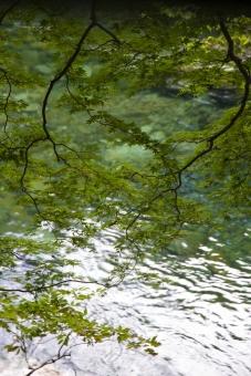 水 自然 川 やまもみじ ヤマモミジ 山紅葉 風景 緑 マイナスイオン