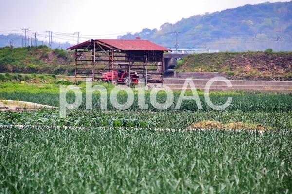 淡路島の玉ねぎ畑と玉ねぎ小屋の写真