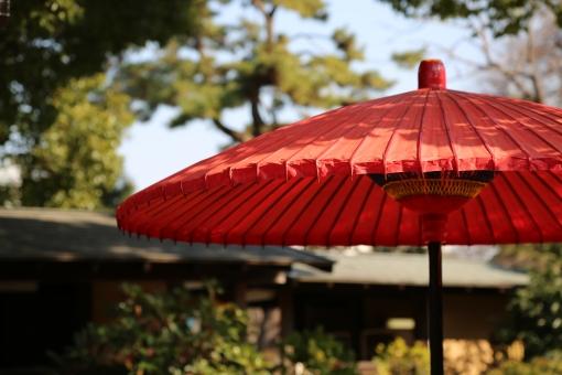 和傘 傘 公園 風景 歴史 古い レトロ 植物 家屋 家 建物 庭 庭園 日本 日本庭園 アジア 江戸 浅草 人気 観光 観光地 旅行 服装 装飾品 赤 布 紙 和紙