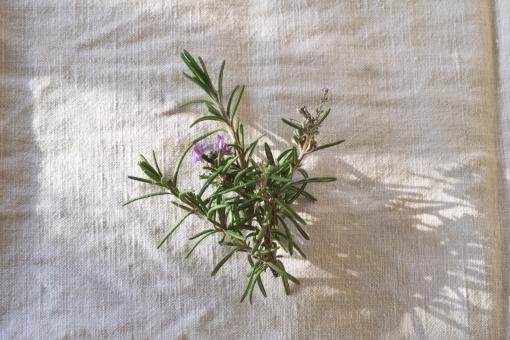 ローズマリー rosemary ハーブ herb はーぶ 肉料理 スパイス 香り付け 香り 紫 花 はな 植物 キッチンガーデン キッチン ガーデニング リネン リネンの布