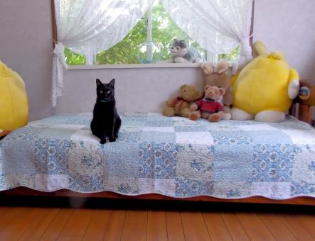 マイルーム ニャンコ 猫 自室 憩い 安らぎ お昼寝