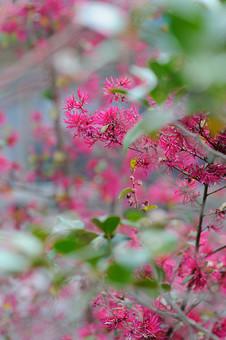 花 桃色の花 赤い花 小さい花 細かい花 小さい 細かい アップ 自然 景色 風景 草花 野生 自生 植物 ぼかし 生花 可愛い 花粉 花びら 赤 ピンク 桃色 葉 めしべ おしべ