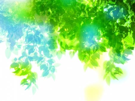 緑 グリーン 黄緑 新緑 明るい 森 植物 木 若葉 自然 春 初夏 葉っぱ 癒し リラクゼーション 葉 木漏れ日 輝き マイナスイオン 爽やか 森林 眩しい 5月 背景 テクスチャー バックグラウンド 夏 クリーン 光 空気