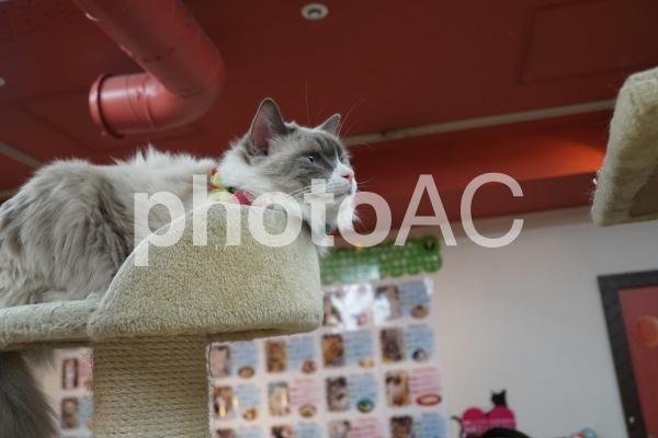 ねこぶくろ 猫カフェの写真