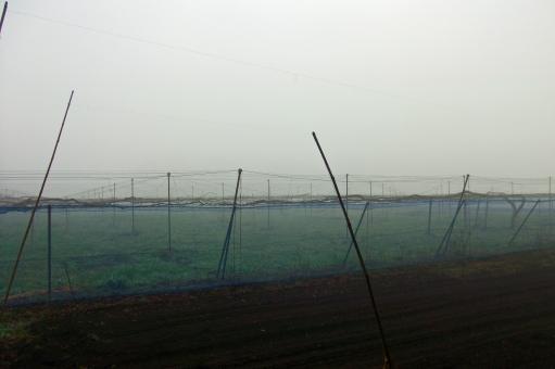 霧 濃霧 fog 朝もや 靄 霞 天気 天候 自然 緑 樹木 木 植物 静寂 閑静 幻想的な風景 幻想的な景色 朝 早朝 風景 景色