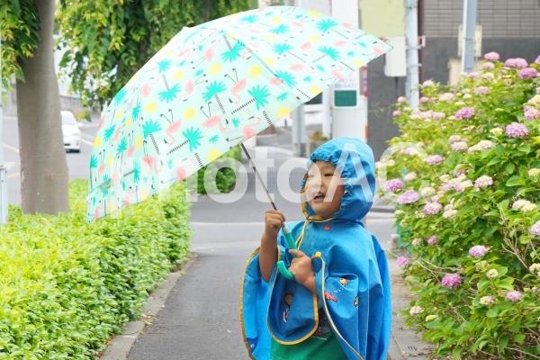 紫陽花と雨と散歩する子供の写真