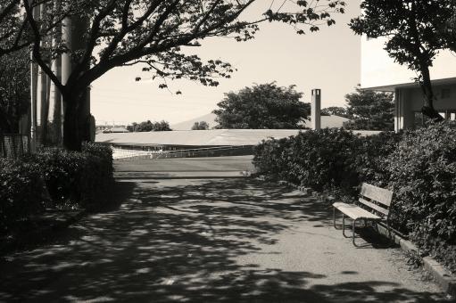 木蔭 木陰 木洩れ日 木漏れ日 初夏 季節感 seasonimage 新緑 自然 緑 草木 樹木 植物 公園 憩いの場所 閑静 風景 景色 散歩 道 道路 白黒 monochrome モノクロ monotone モノトーン