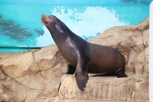 アシカ 水族館 リラックス 気持ち良さそう 海の生き物
