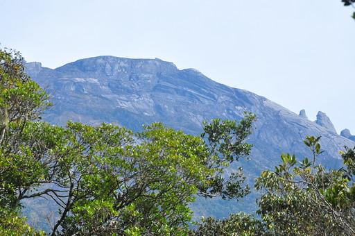 自然 植物 木 樹木 葉 葉っぱ 緑 枝 山 岩肌 岩壁 グレー 灰色 ねずみ色 空 曇り 荒れた 高い 無尽 風景 景色 フィリピン 外国 熱帯 東南アジア 島国