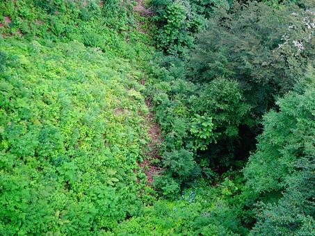 静か 喉か 平和 大地 自然 環境 問題 エコ 活動 風景 田舎 植物 リーフ 草 草花 大自然 生い茂る 茂る 緑 山 樹木 木々 森 森林 景観 深い 底 空撮 深緑 グリーン