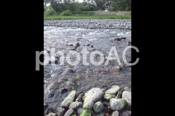 小川の浅瀬の写真