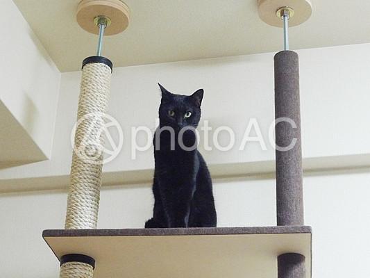 キャットタワーと黒猫の写真