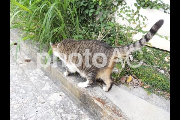 猫24(Okinawa)の写真