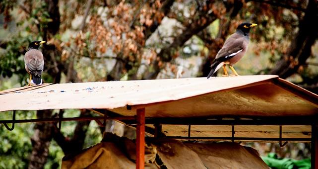 鳥 とり トリ 野鳥 小鳥 動物 鳥類 小動物 野生 屋根 屋外 外 バードウォッチング 小屋 建物 自然 秋 紅葉 樹木 樹 木 植物 環境 羽根 くちばし