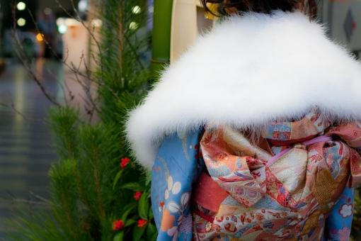 着物 着物姿 後姿 うしろすがた 女性 成人式 帯 正月 お正月 おめでとう お祝い 御祝 華やか 華