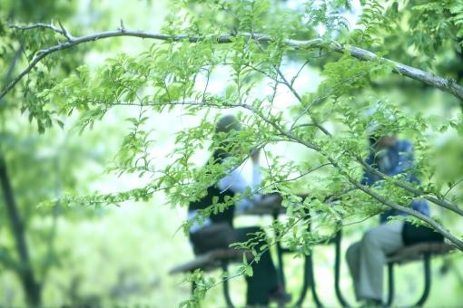 自然 風景 植物 樹木 木の葉 木陰 新緑 若葉 新芽 春 初夏 夏 二人 人物 友達 シニア 友人 会話 のんびりと 癒しの時間 休息 休暇 休日 旅行 日曜日 ポストカード 背景 テクスチャー コピースペース 待ち受け画像 バックスペース 女性 緑に囲まれて 公園 森 林 ベンチ テーブル