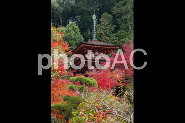 錦秋・京都絵巻!岩船寺の紅葉の写真