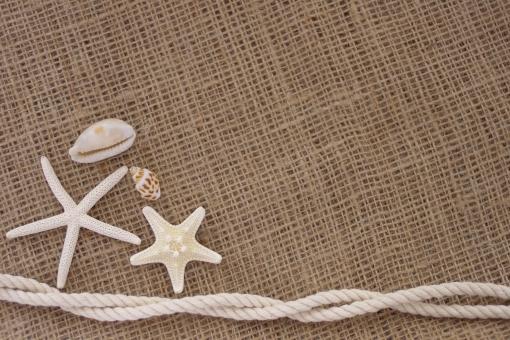 貝殻 貝 ヒトデ マリン ミル貝 海 夏 文字スペース 背景 文字入れ ホワイトスペース カード 挨拶 グリーティングカード ナチュラル 自然
