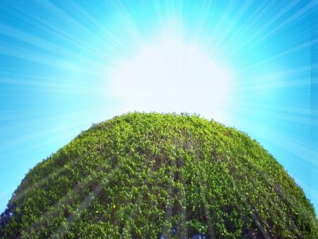 自然 背景 自然背景 山 wood 木 森 林 空 青空 大空 大陽 反射 フラッシュ テクスチャ テクスチャー 快晴 晴天 sun 葉っぱ 日光 育つ 植物 アウトドア 緑 サンシャイン 日差し 日射し 日ざし