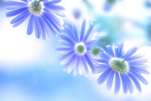 自然 植物 花 マーガレット 夏の花 夏 初夏 春の花 暑中見舞い 背景 テクスチャー ポストカード 待ち受け画像 光 光透過光 光溢れる 二人の夏 夏の思い出 夏休み 青空 公園 野山 お花畑 花壇 ガーデン コピースペース バックスペース 旅の思い出 梅雨明け 爽やかイメージ 野外アウトドア
