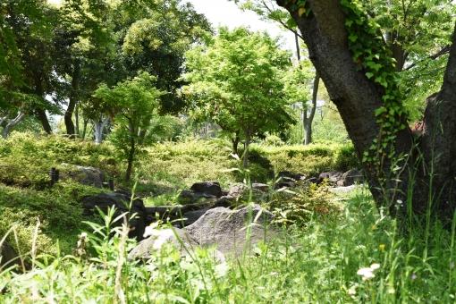 新緑 しんりょく 3月 4月 5月 6月 葉 葉っぱ 緑 黄緑 みどり きみどり 自然 綺麗 爽やか 見上げる 人気 植物 樹木 新鮮 森 林 公園 グリーン 暖かい 季節 若草色 若葉 木洩れ日 景色 木漏れ日 こもれび 明るい 気分 最高 気持ちが良い 空気 クリーン 森林浴 テクスチャ 壁紙 バックグラウンド ヒーリング リラックス 癒し マイナスイオン 初夏 夏 春 リラクゼーション 涼しい セラピー エコ eco アップ 接写 至近距離 ミニチュア風 可愛い かわいい 小さい 雑草 草原 野原