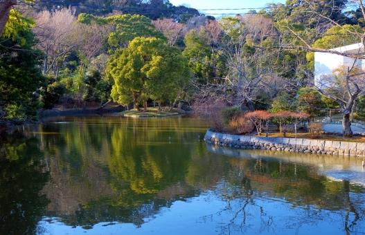 神奈川 鎌倉 鶴岡八幡宮 池 森 林 木々 木 水面 枯れ木 冬 水