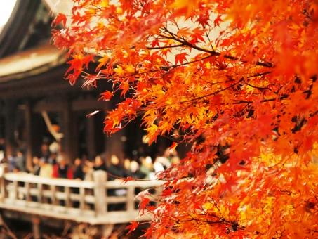 清水 京都 紅葉 もみじ モミジ オレンジ 色づき 秋 舞台 高い 綺麗 きれい 美しい