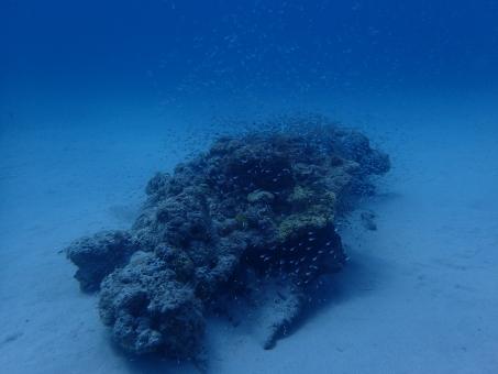 夏 青 自然 ダイビング 水中 海 魚 8月 沖縄 岩礁 座間味島 レディドラゴン